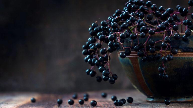 Altes Obst: Schwarzdorn, Felsenbirne, Holunder.